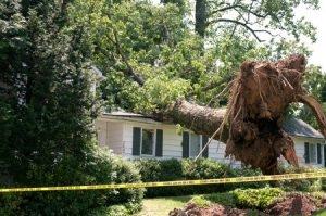fallen tree roof damage